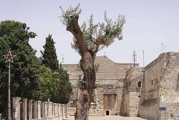 Árbol de la Paz e Iglesia de la Natividad en Belén. Foto © Satur Casado