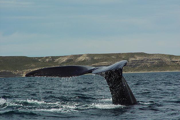 Avistaje de ballenas en Península Valdés. Foto © Patrick Mreyen