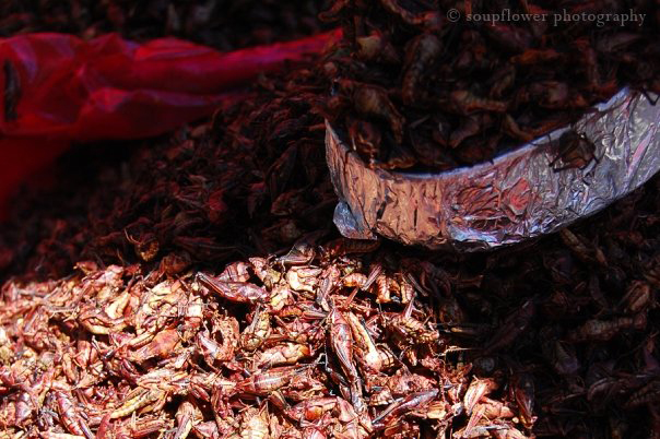 Chapulines en Oaxaca. Foto © Soupflower