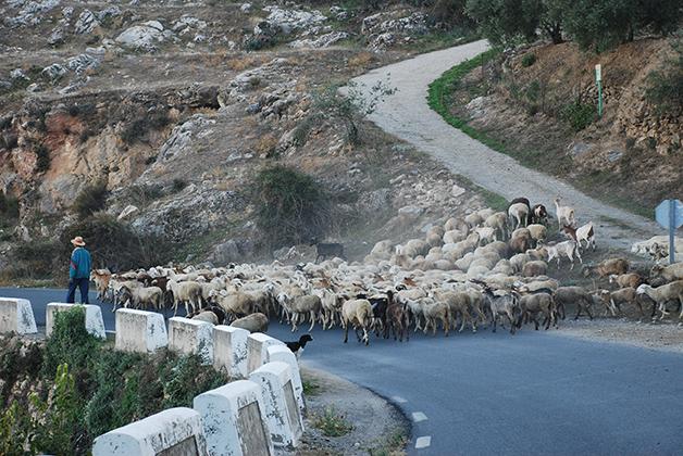 Tráfico en la Alpujarra. Foto © Silvia Lucero