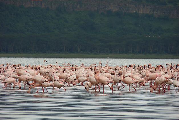 Lago Nakuru. Foto © Vanessa Lucero