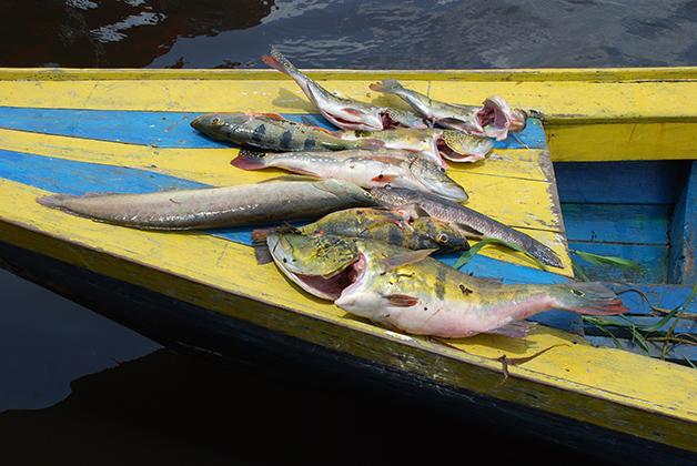 Nuestra comida recién pescada. Foto © Patrick Mreyen