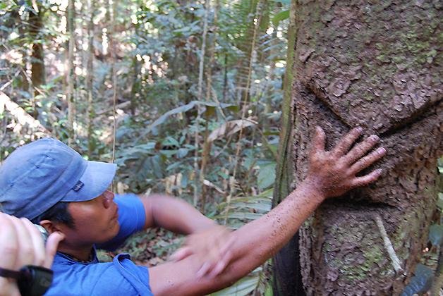 Demostrando cómo usan las hormigas como repelente natural. Foto © Silvia Lucero