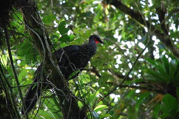 No puedes dejar de buscar aves en los árboles. Foto © Patrick Mreyen