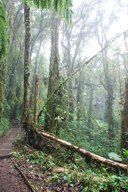 Haciendo senderismo en el Bosque Nuboso de la Reserva de Monteverde. Foto © Patrick Mreyen