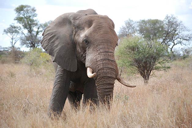 Los elefantes me encantaron. Foto © Patrick Mreyen