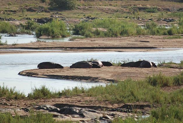 Hipopótamos tomando el sol. Foto © Patrick Mreyen