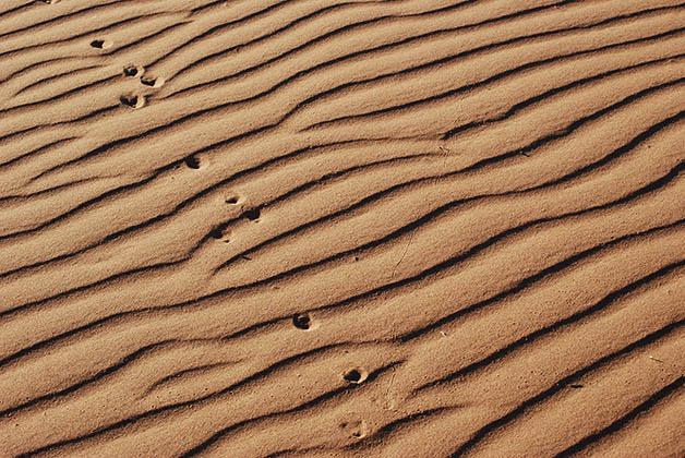 La arena de la superficie se mueve con el viento. Foto © Patrick Mreyen