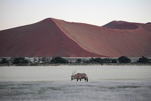 Lo ideal es ir viendo el cambio de colores en las dunas. Foto © Patrick Mreyen