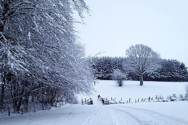 Los paisajes son preciosos, sobre todo con los arboles cubiertos de nieve. Foto © Silvia Lucero