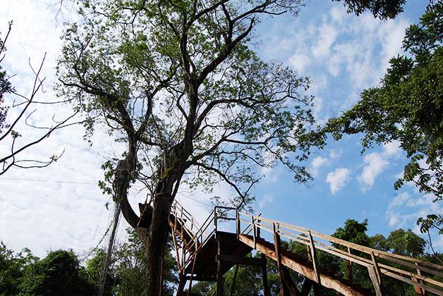 Escalera para subir a uno de los árboles y comenzar el canopy. Foto © Silvia Lucero