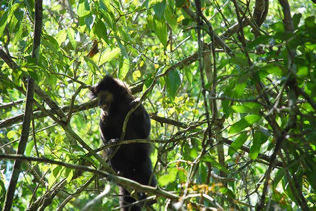 Monos en Iguazú. Foto © Patrick Mreyen