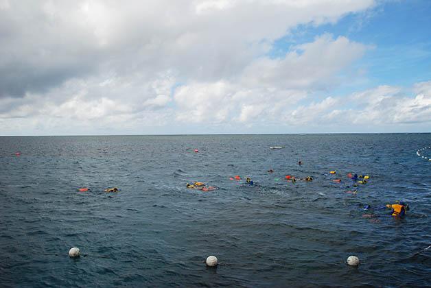 Snorkel en la gran barrera de coral en Australia. Foto © Silvia Lucero