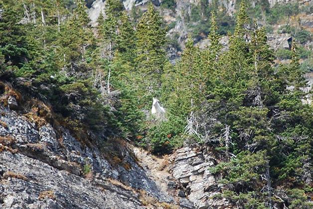 ¿Alcanzas a ver la cabra? Foto © Patrick Mreyen