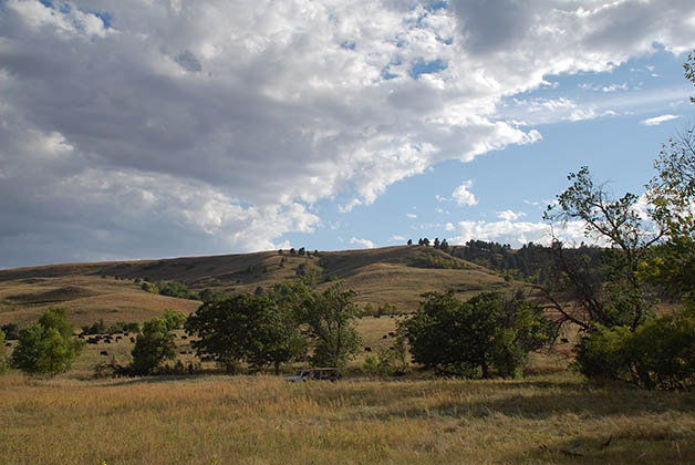 Parque Custer State, hogar de los bisontes. Foto © Patrick Mreyen