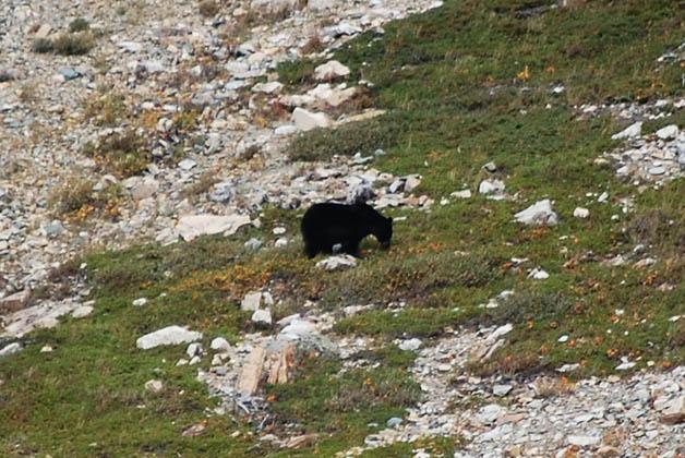 Uno de los osos que alcanzamos a ver. Foto © Patrick Mreyen