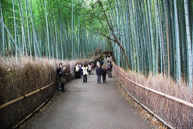 Bosque de bambú Arashiyama. Foto © Silvia Lucero