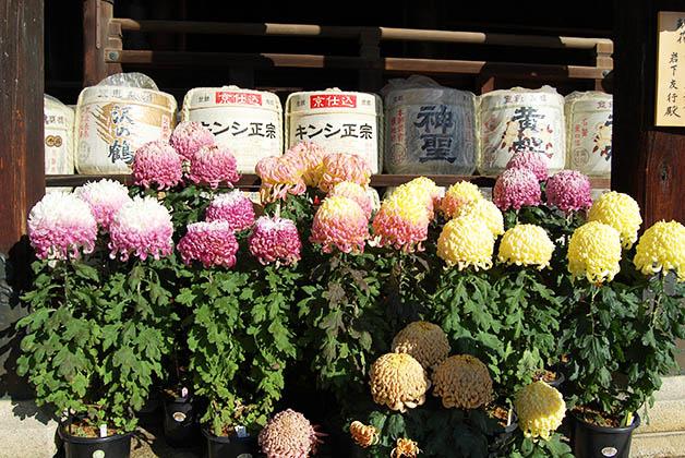 Me encantaron las flores en los templos. Foto © Silvia Lucero