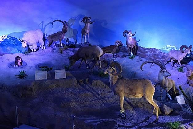 Siempre hay tiempo para tontear. En el Museo de la Evolución. Foto © Patrick Mreyen