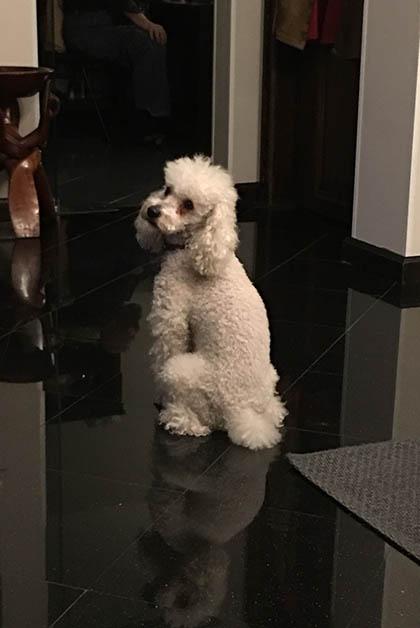 Un hotel familiar, hasta conocimos al perrito del mago Astor. Foto © Silvia Lucero